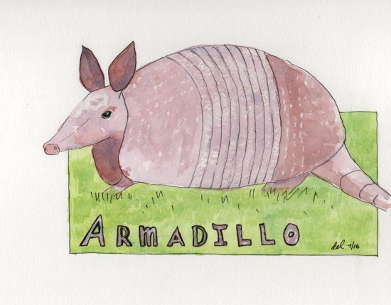 Armadillo - watercolor and ink