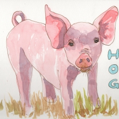 Hog - watercolor and ink