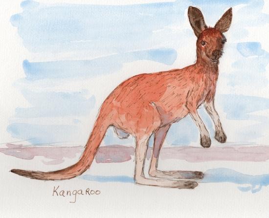 Kangaroo - watercolor and ink