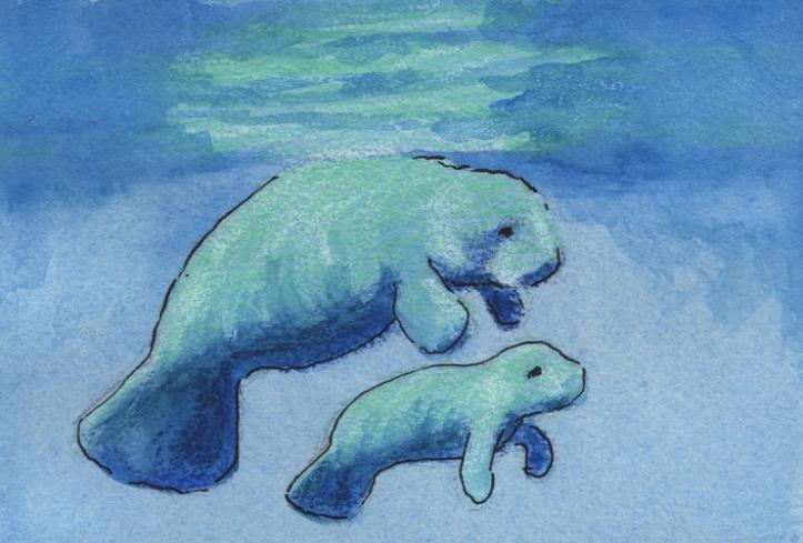 Spring Calf - watercolor, watercolor crayons and ink