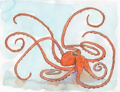 O for Octopus - watercolor and ink