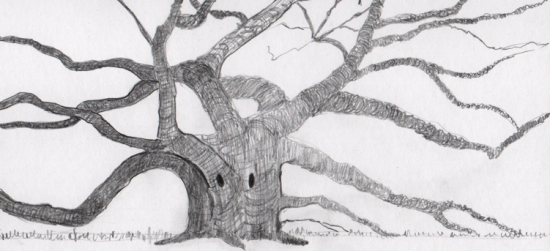 Singing Tree - Pencil
