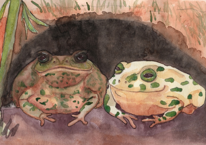 The Toads - watercolor and ink