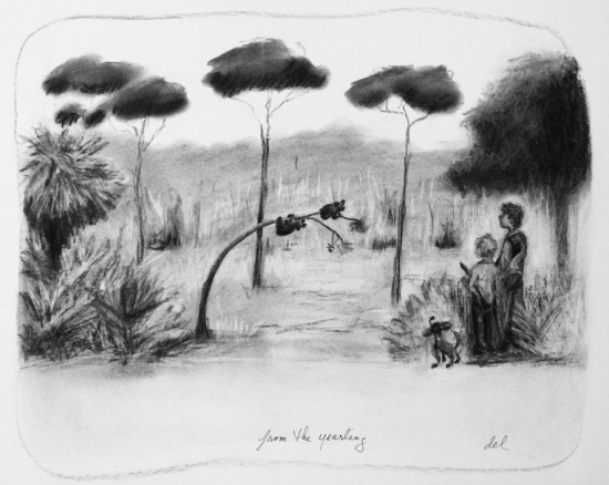 From The Yearling - Charcoal