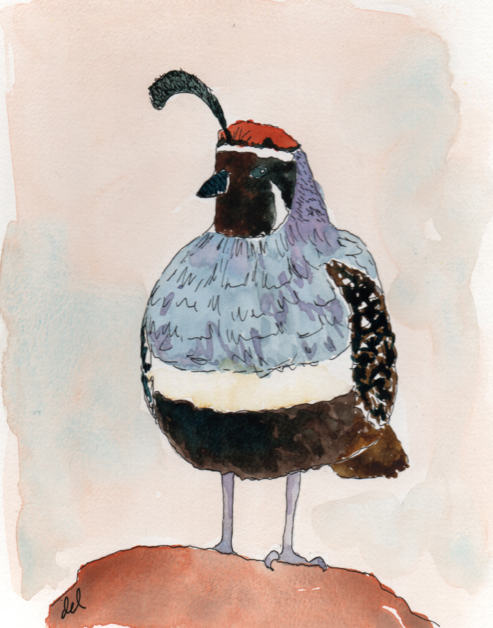 Quail - watercolor and ink